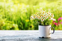 The Effect of Spring on Your Mental Health